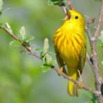 bird-singing-spring